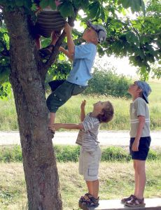 Back in the day,when boys climbed trees